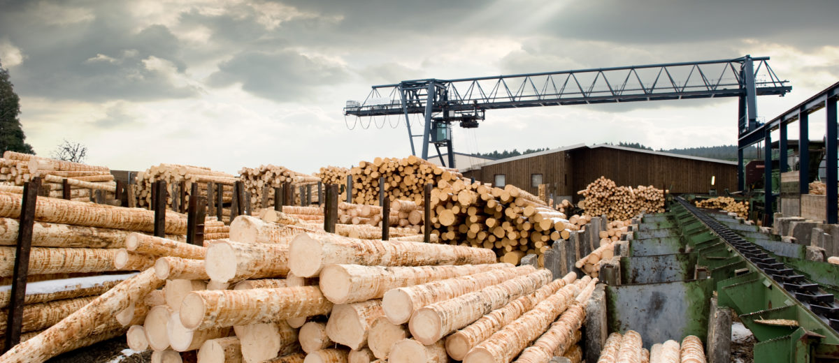 Stacks of logs at sawmill